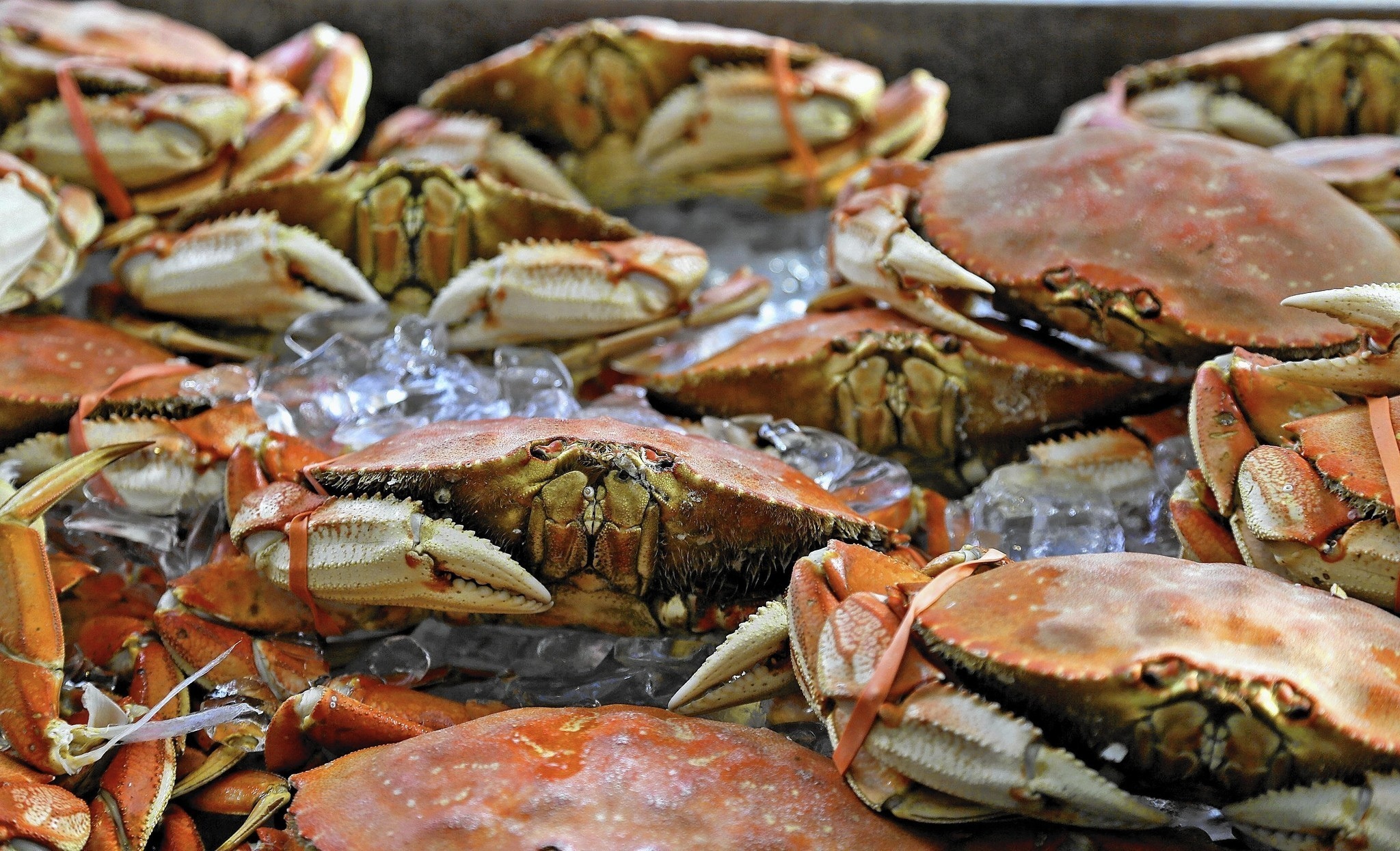 Dungeness Crab | FishChoice