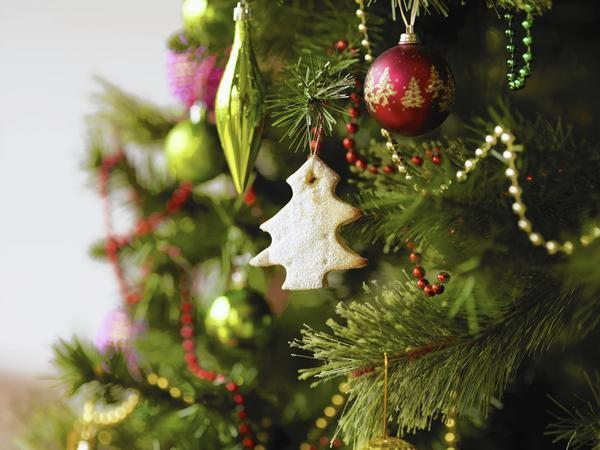 recycling gives christmas trees a new role enriching soil for other plants chicago tribune - Chicago Christmas Tree Recycling
