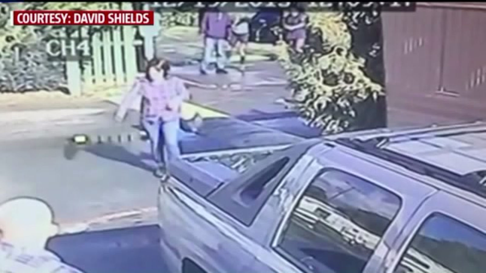 Cartoon character smedley the dog courts at fairfield - Police Search For Fairfield Woman Seen Throwing Dog In Viral Video La Times