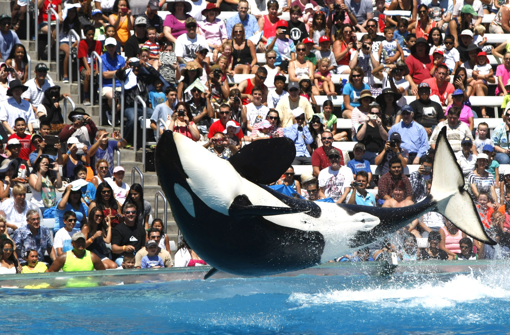 Judge throws out false advertising lawsuits against seaworld la times