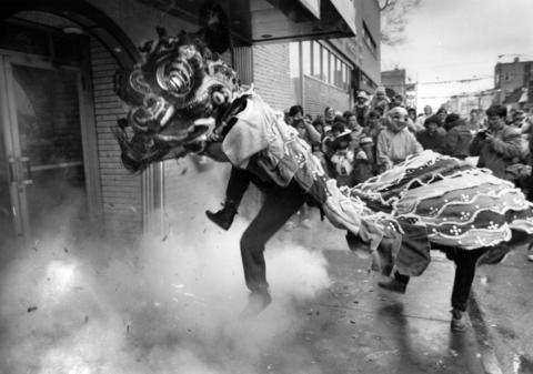 """After accepting a store's offering of fruit and lettuce, a lion dances amidst firecrackers set off by a Chinatown business onFeb. 24, 1985. """"Its a bad sting at first,"""" says dancer Tom Young of the firecrackers. """"But you get into the dance and after a while you don't really realize it."""""""