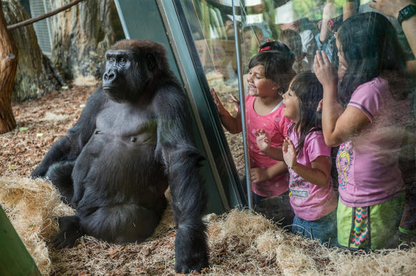 <p>Chelsea Gonzalez, 9, right, with sister Abigail,4, and friend Jilliana Tirado, 6, interact with gorillas at Regenstein Center for African Apes at the Lincoln Park Zoo.</p>