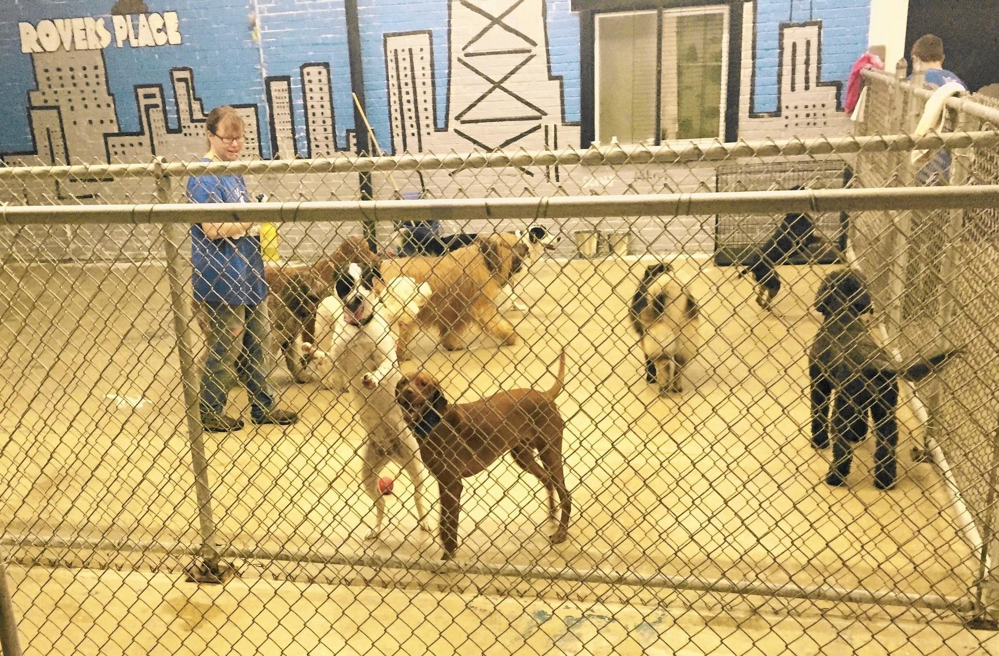 100 dog kennel planned for Northbrook s Skokie Boulevard