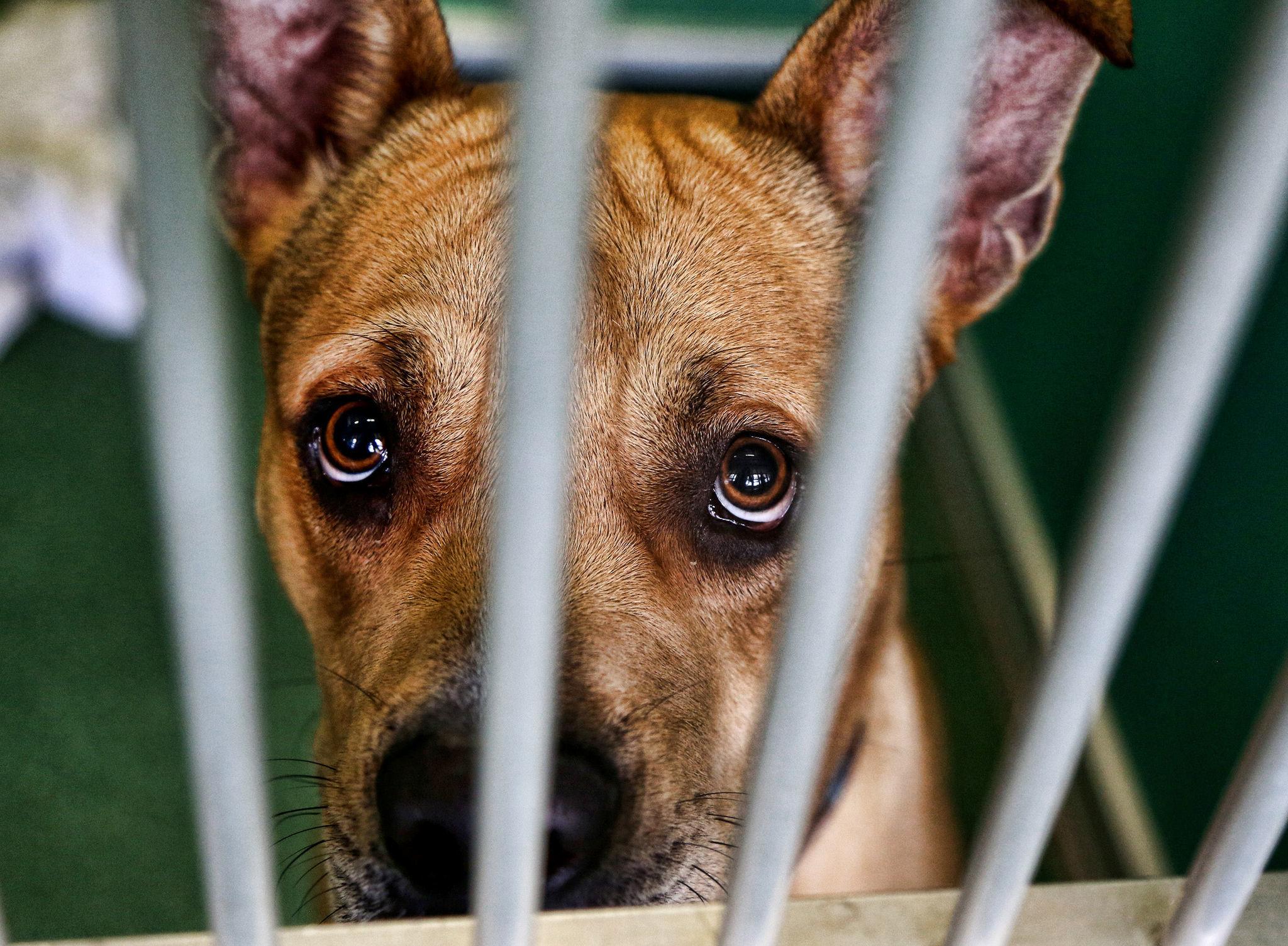 Pet Shelter West Palm Beach