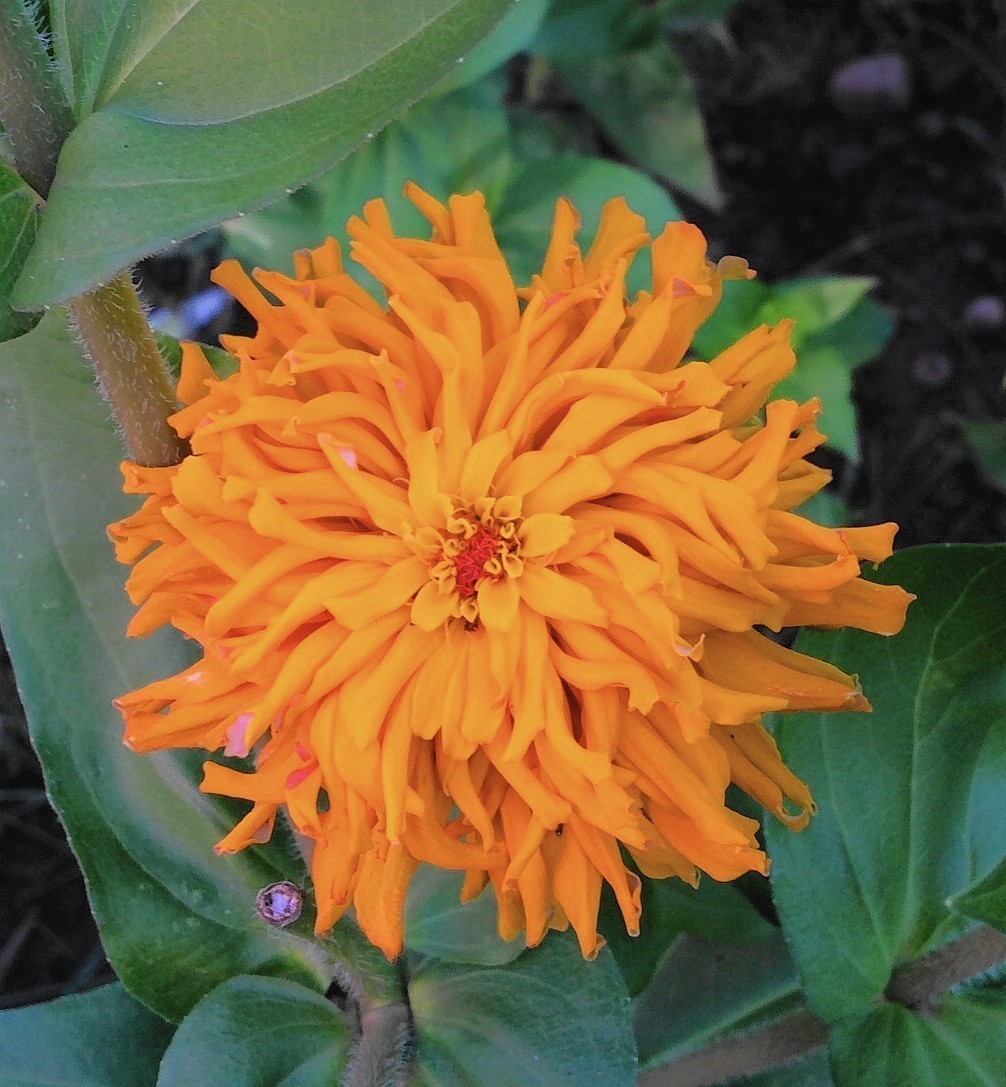 John Scheepers Kitchen Garden Seeds Armchair Gardeners Survive Winter With Colorful Flower Seed