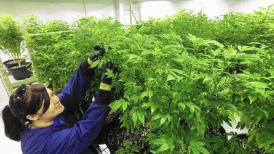 Illinois declines to expand medical marijuana conditions list