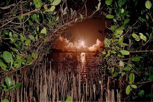 <p>Mangrove trees at Merritt Island National Wildlife Refuge frame the liftoff of the space shuttle Discovery. It's on a repair mission to the Hubble Space Telescope.</p>