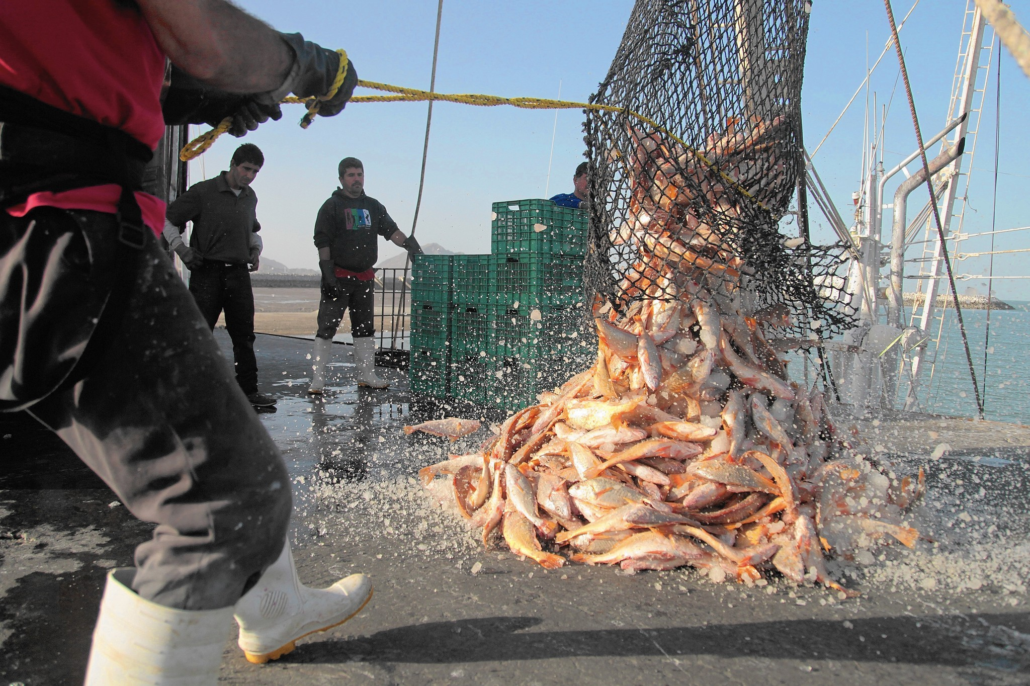 Mercury, DDT and other contaminants in fish are at a four-decade low - LA Times