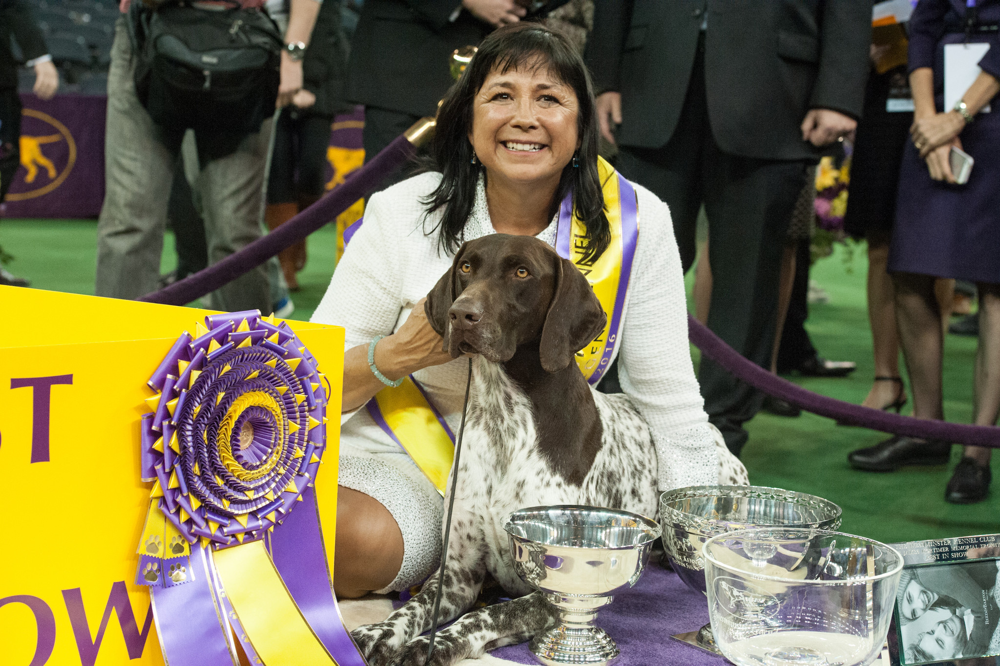 Cj The German Shorthaired Pointer Wins Best In Show At Westminster Chicago Tribune