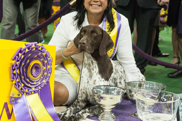 German shorthaired pointer named CJ claims best in show crown at Westminster