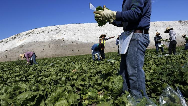 paraquat, herbicida, pesticida, campos, agricultura, EPA, envenenamiento