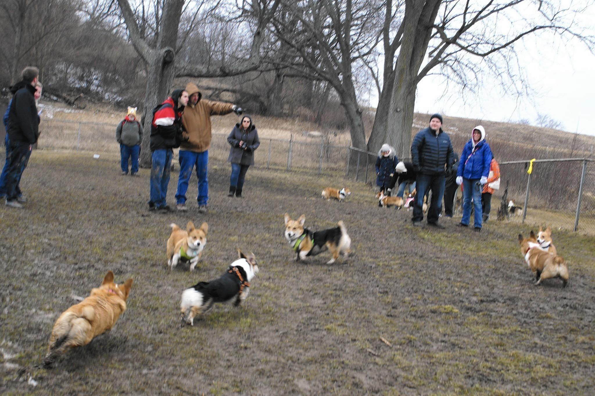 Schweitzer Woods Dog Park