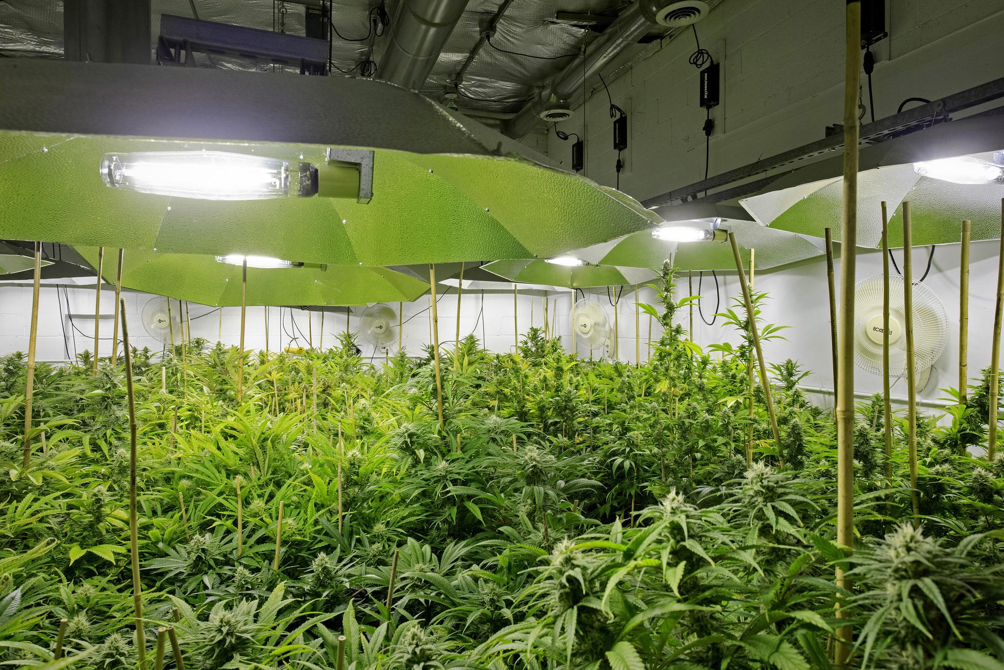 Wall Street vets bet on marijuana commodity exchange