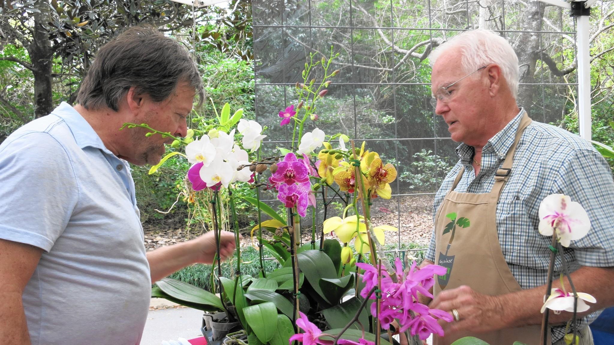 leu gardens spring sale draws thousands to plant u0027paradise