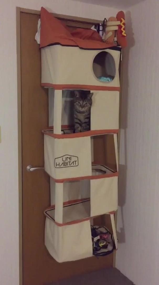 Cat Rings Bell For Snack