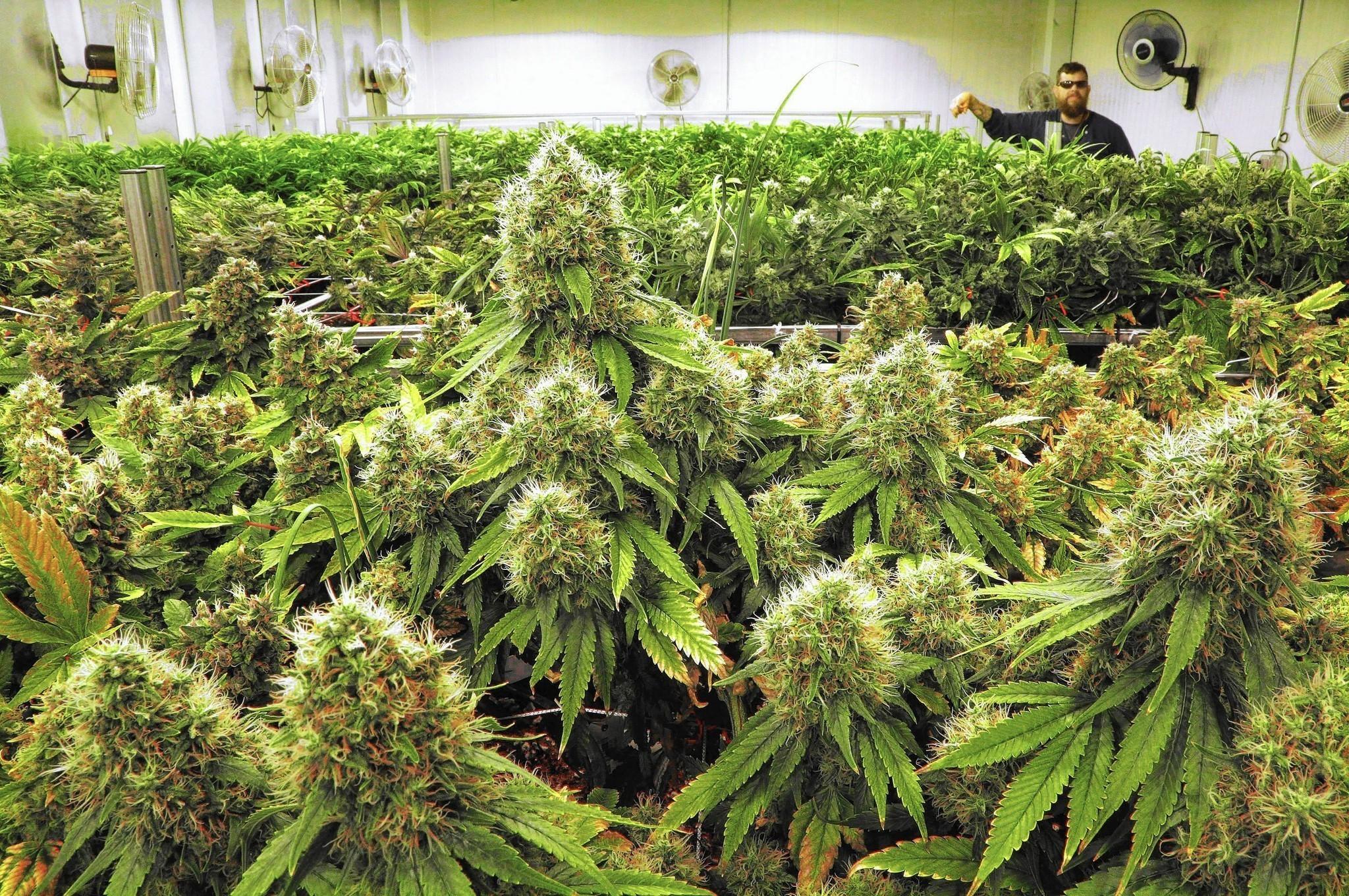 pa  medical marijuana bill may face new roadblocks