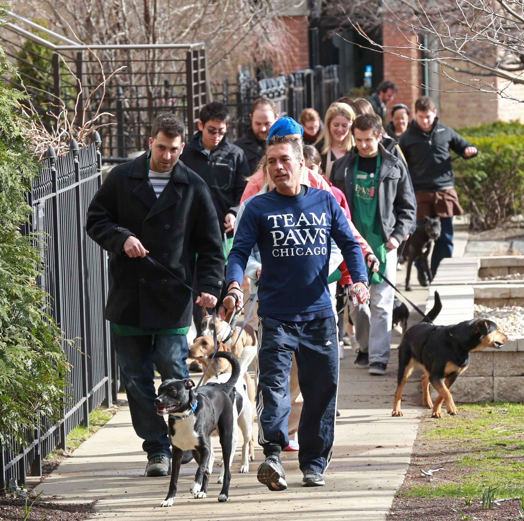 Too costly for Chicago to turn city-run shelter into no-kill zone?