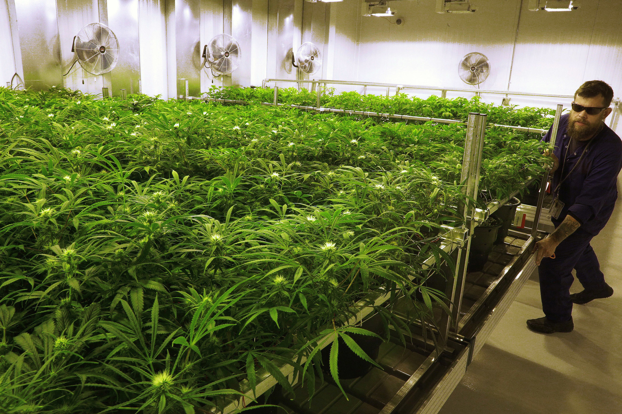 It S Time For The Dea To Reclassify Marijuana La Times