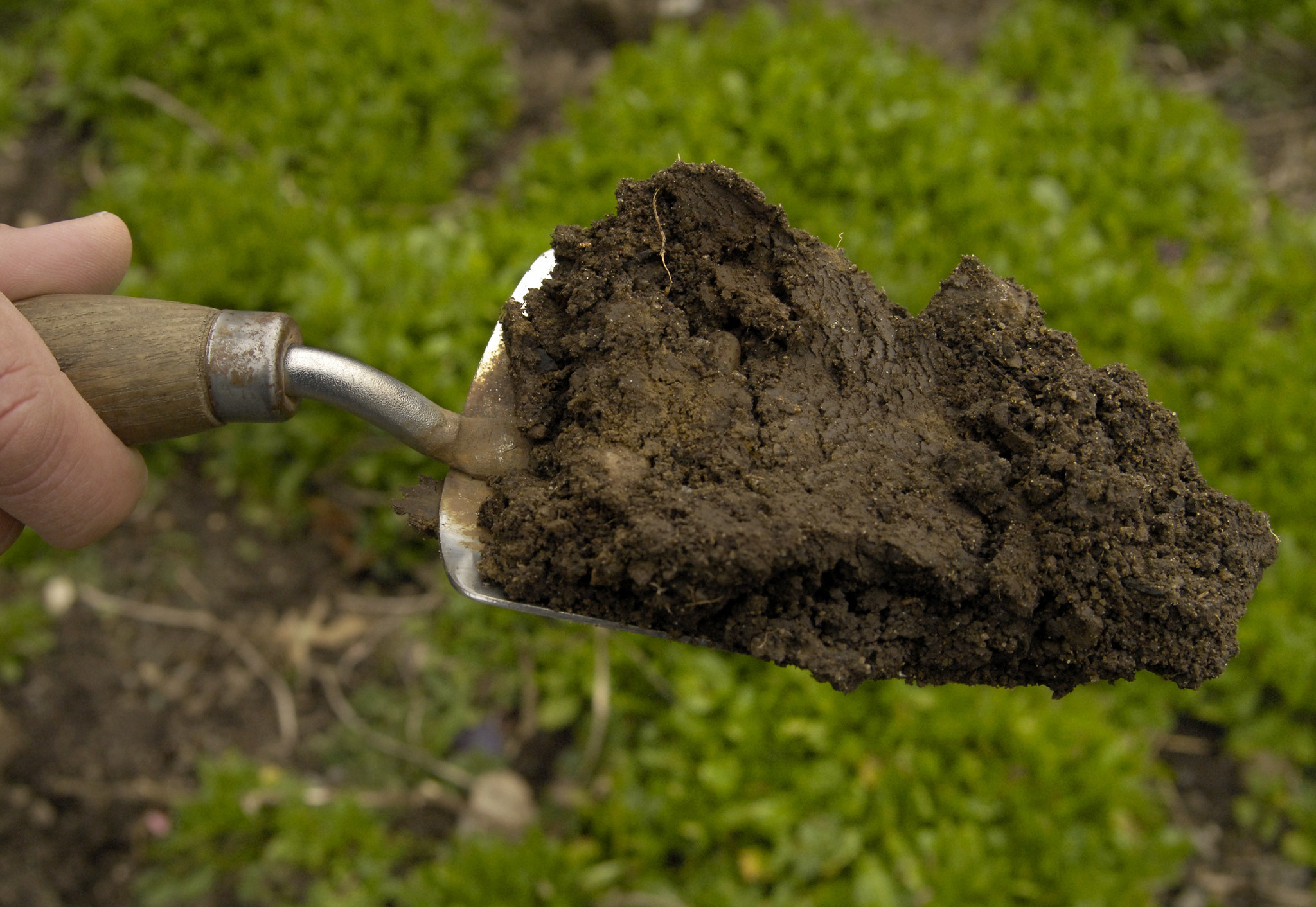 Garden Q&A: How can you tell if soil is \'workable\'? - Baltimore Sun
