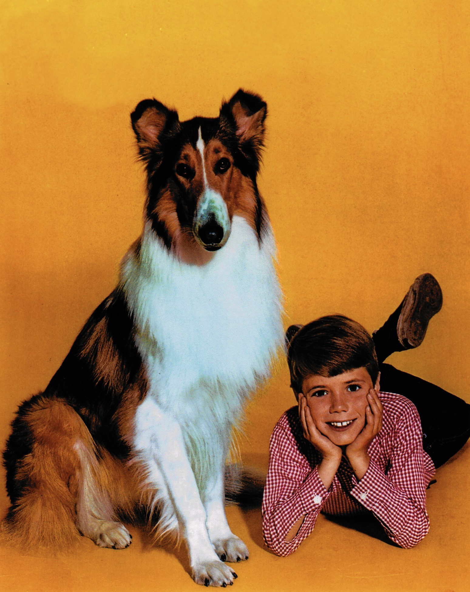Jon Provost Coming To Allentown Tells Why He Quit Lassie The