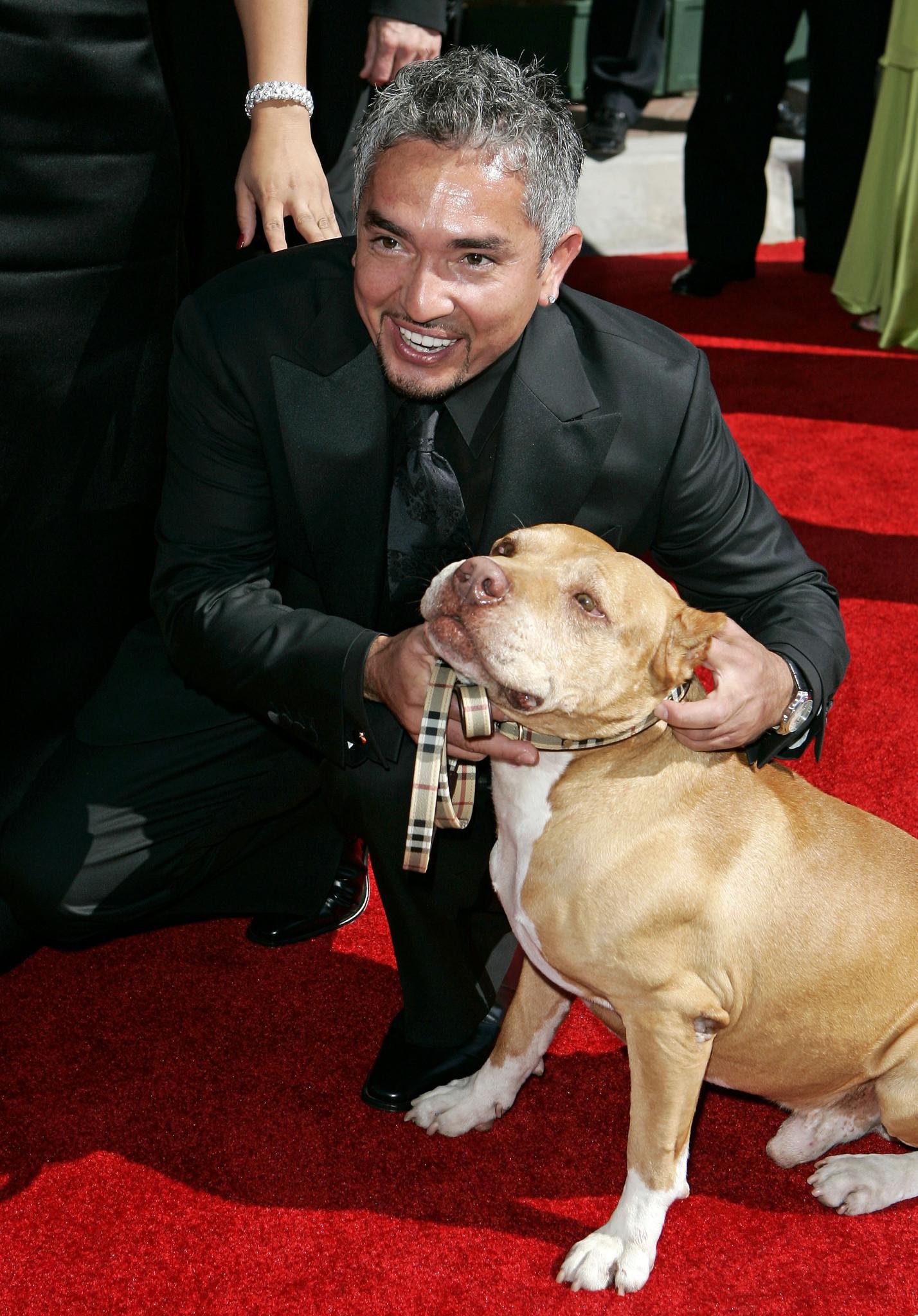 no charges against tvs dog whisperer cesar millan