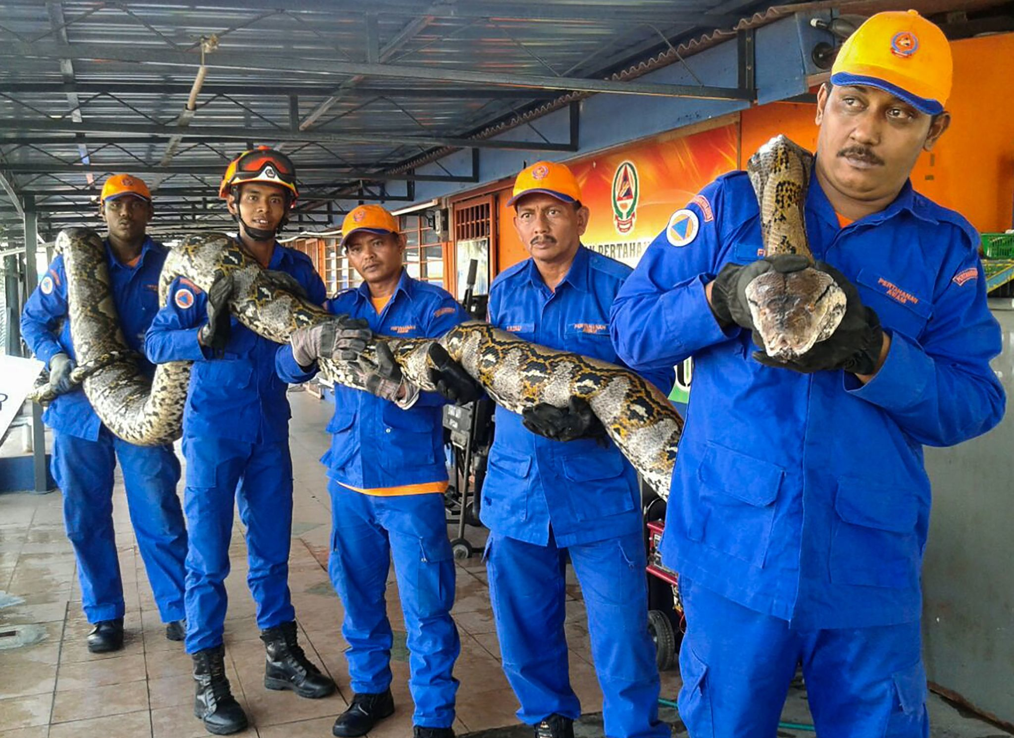 possibly the world s longest snake ever found in malaysia then it