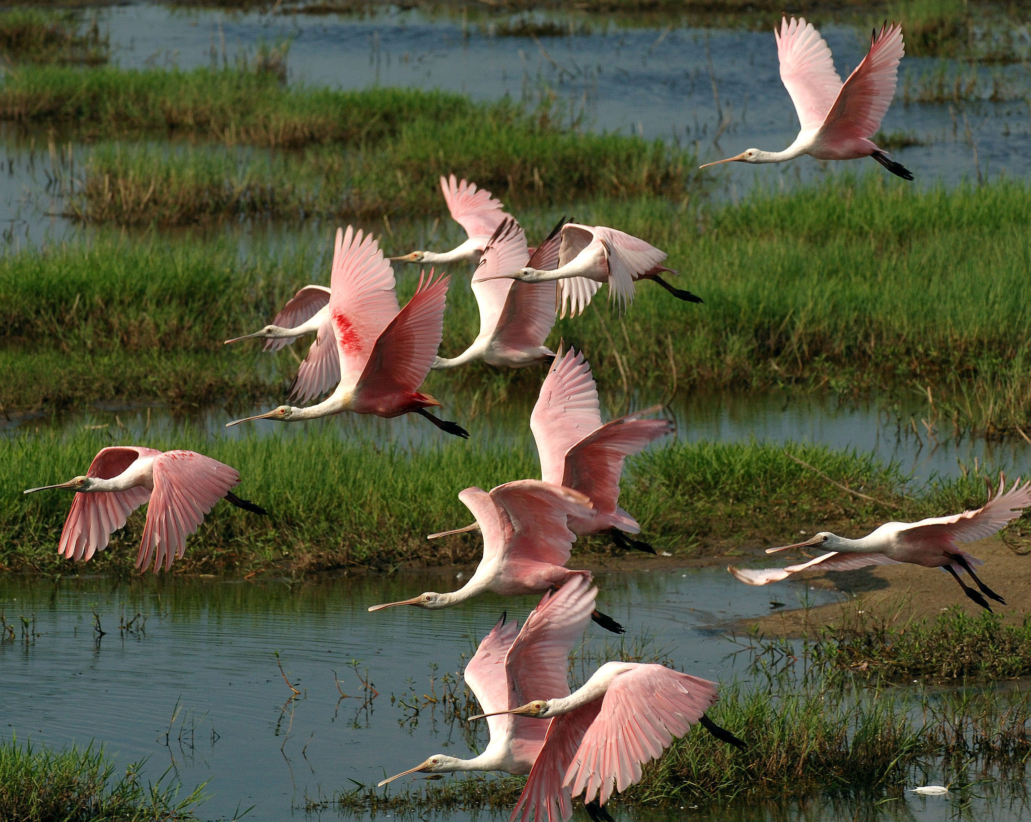 Free entry at Everglades National Park and Shark Valley on Saturday