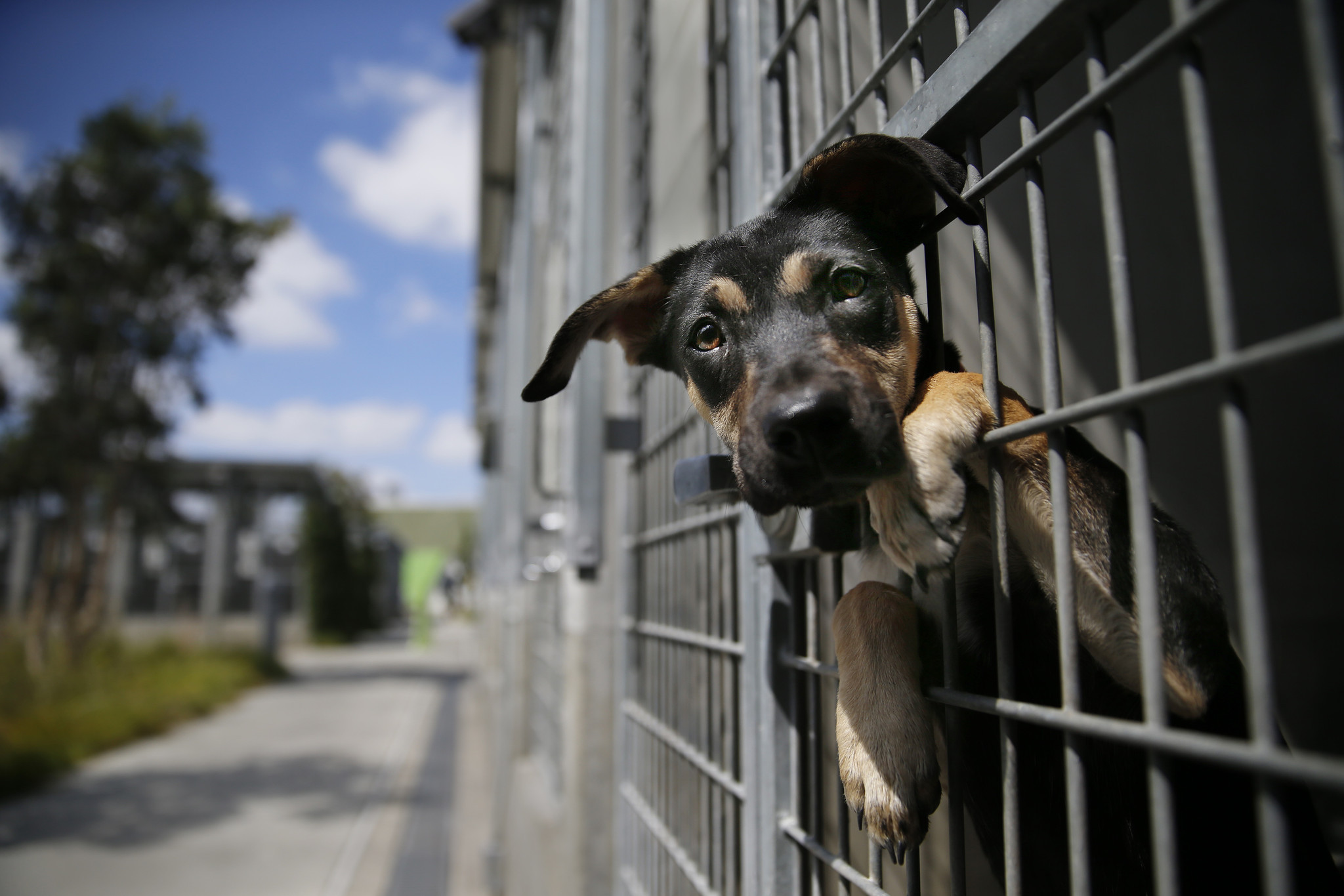 Best Animal Shelter : L a closer to no kill animal shelters as euthanization