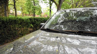 Pollen woes worse this year