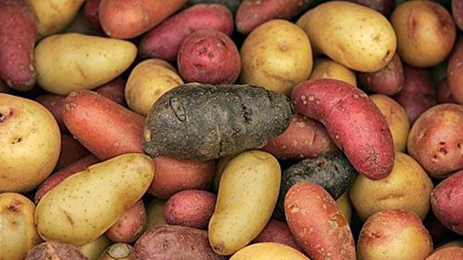 Farmers market report new potatoes are in season here are 9 recipes la times - New potatoes recipes treat ...