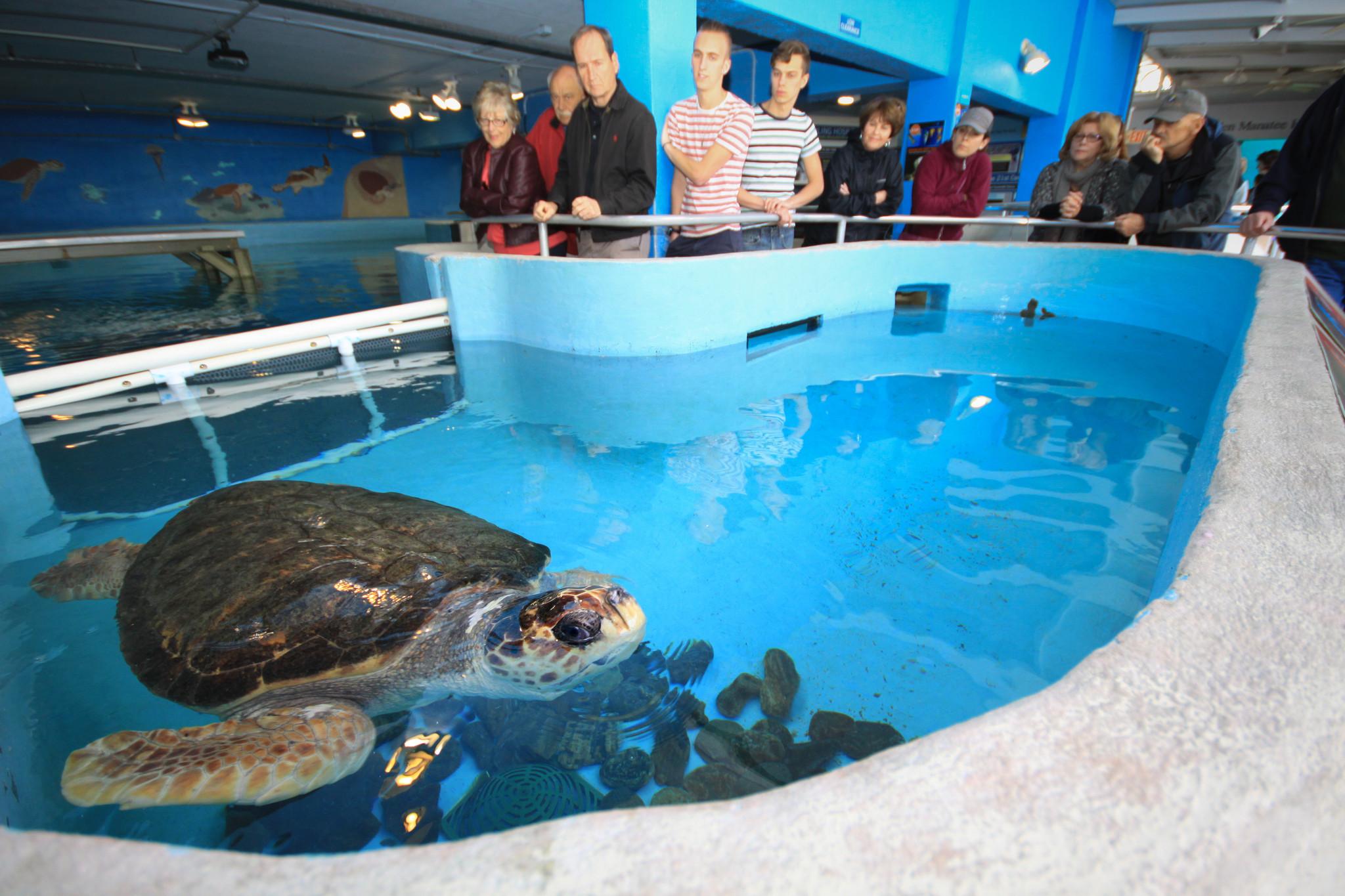 Florida Museum Guide: Mote Marine Laboratory, Sarasota ...