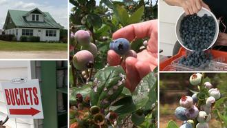 Prime time for berry picking, kicking back at Groveland farm