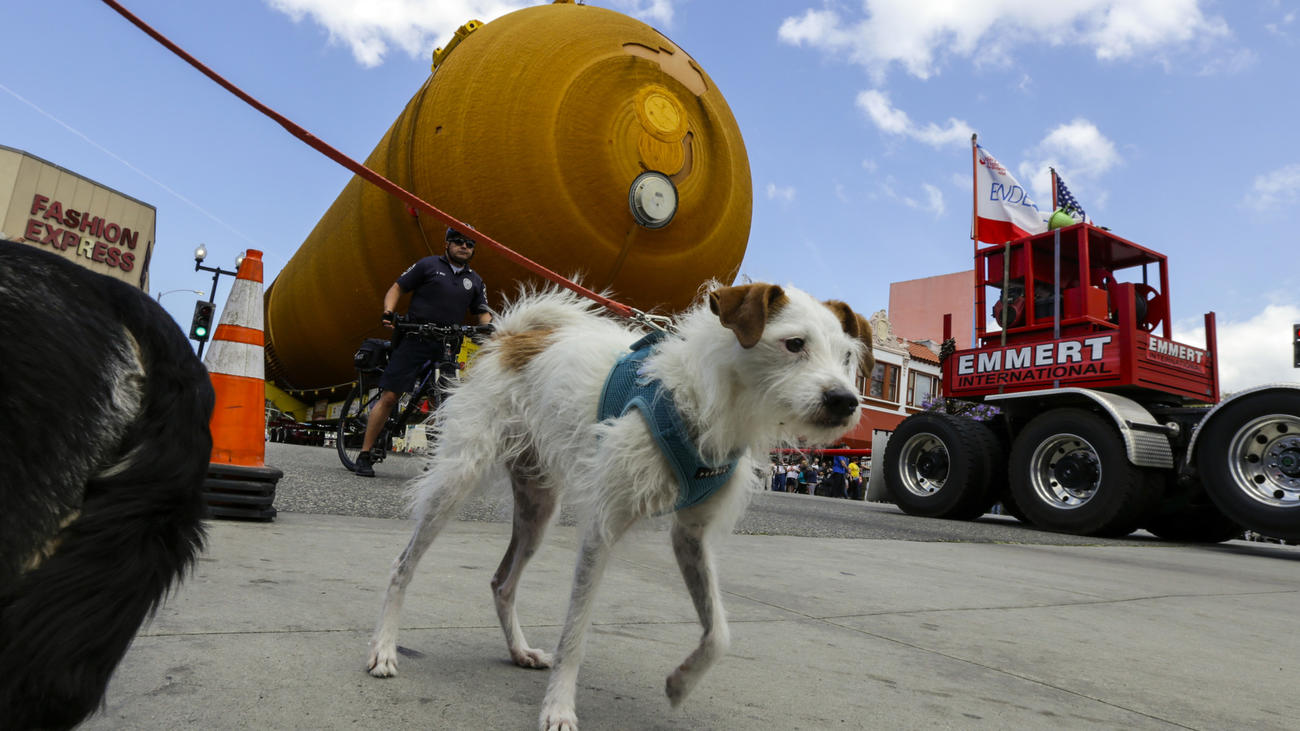 Kirby the dog appears to be escorting ET-94, NASA's last remaining space shuttle external tank, along Manchester Avenue in Inglewood on its way to the California Science Center. (Irfan Khan / Los Angeles Times)