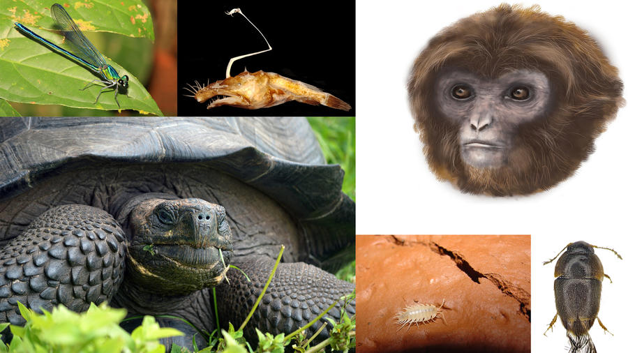 Meet some amazing animals and plants that are new to science