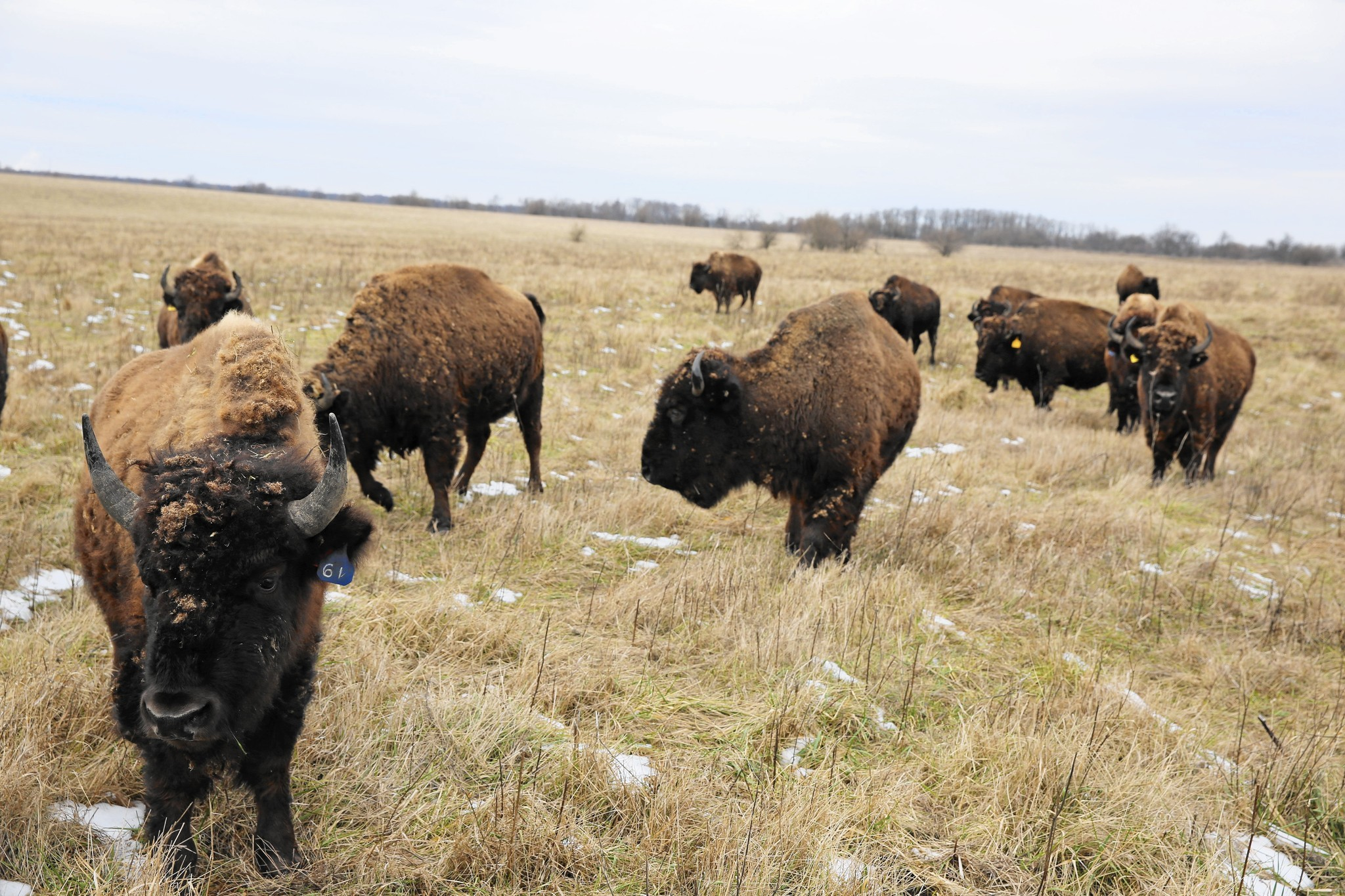 Daytripping: Go south on Route 53 to see bison, race cars, antiques