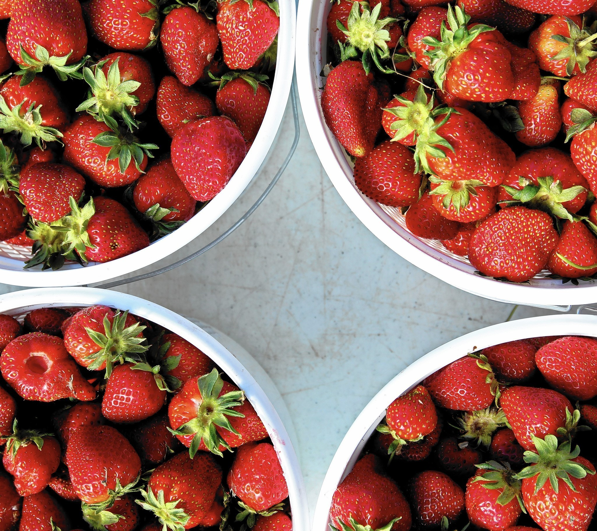 Strawberries in season: Where to find them and what to do with them