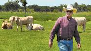 Cattle ranchers want to put more Florida-grown beef on the table