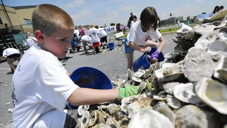 Cranberry Station Elementary School cultivates future oysters, engineers