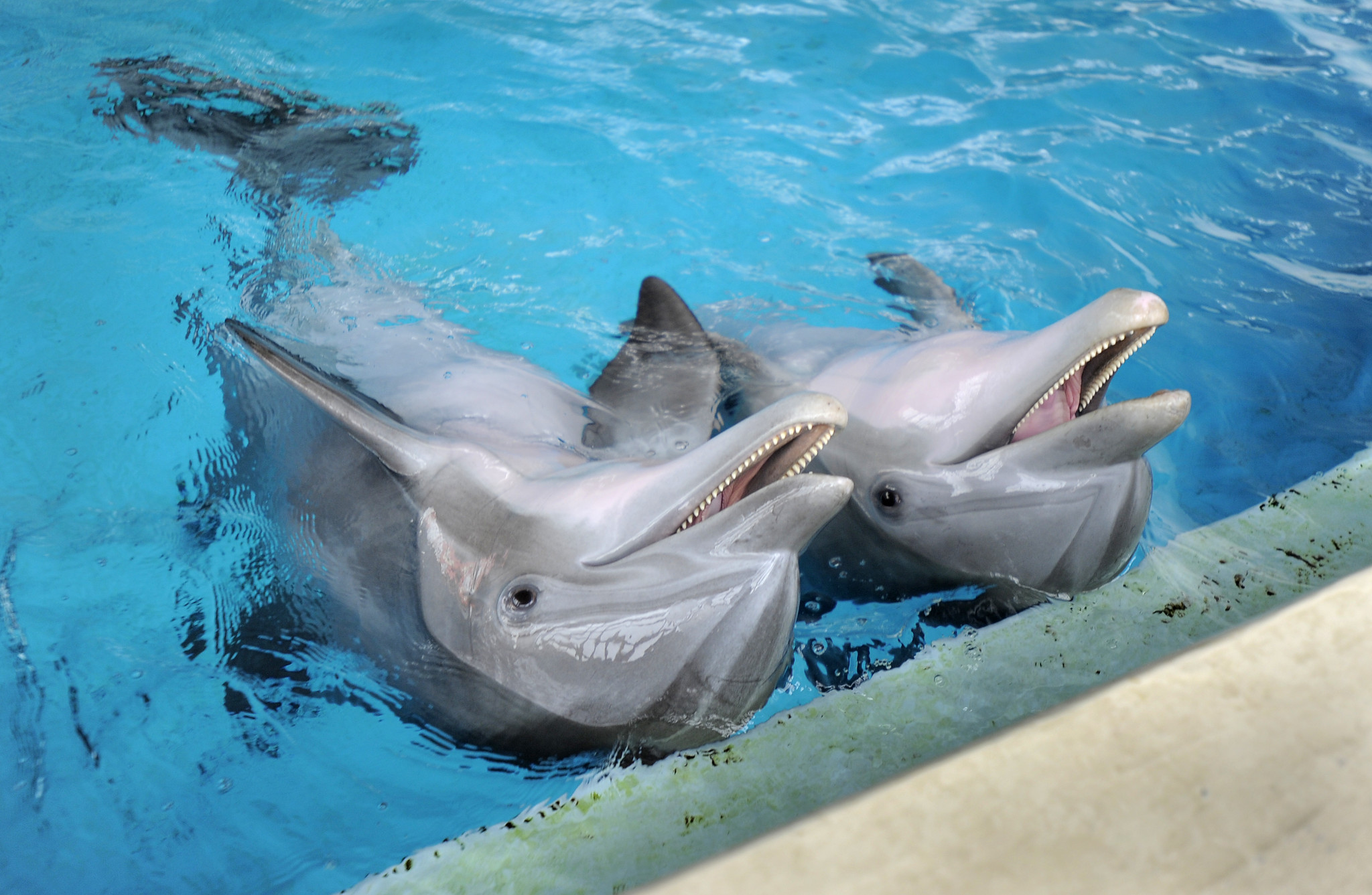 National Aquarium's plan to relocate dolphins from Baltimore by 2020 is delayed by climate change, pollution
