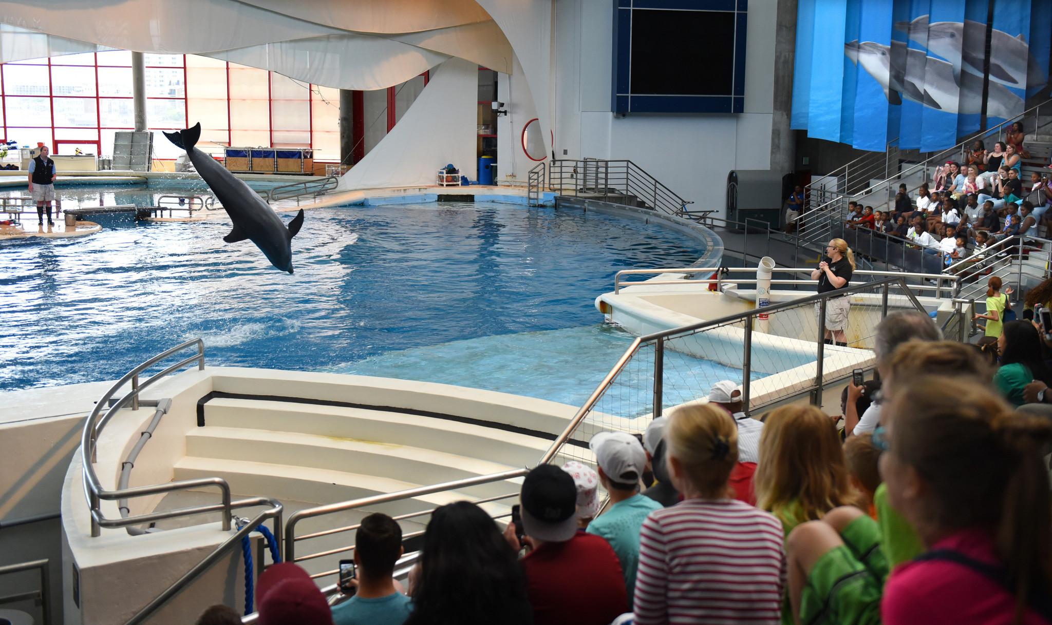 Baltimore Aquarium | Baltimore Reacts To Dolphins Leaving National Aquarium Baltimore Sun