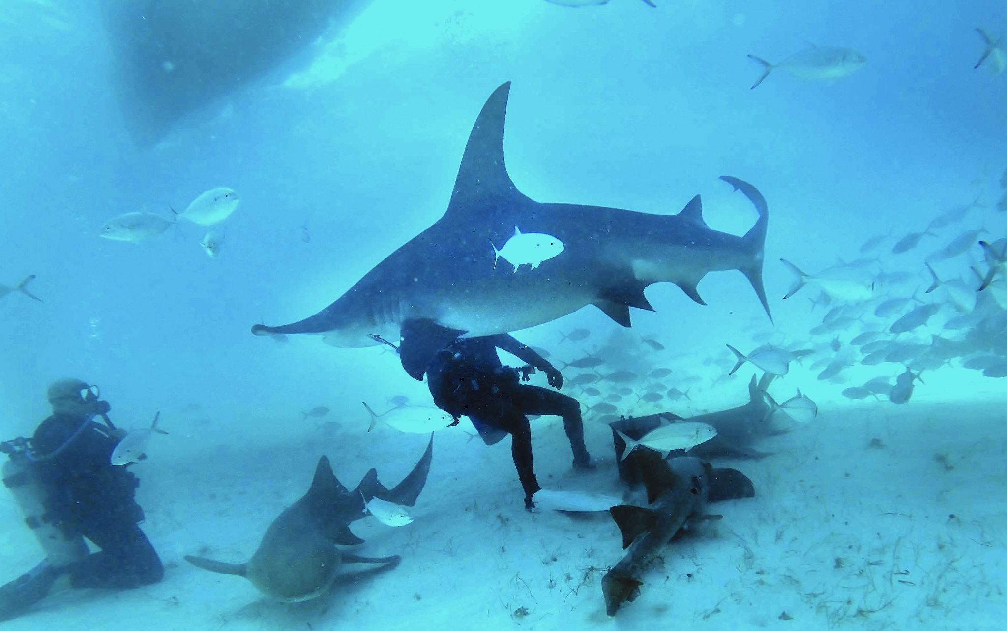 bimini appeal ranges from chasing big fish sharks to naps and