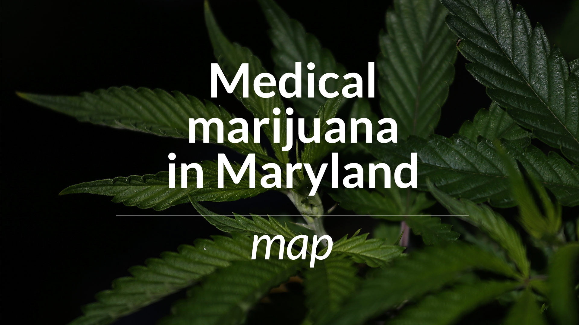 maryland officials expect to award preliminary licenses