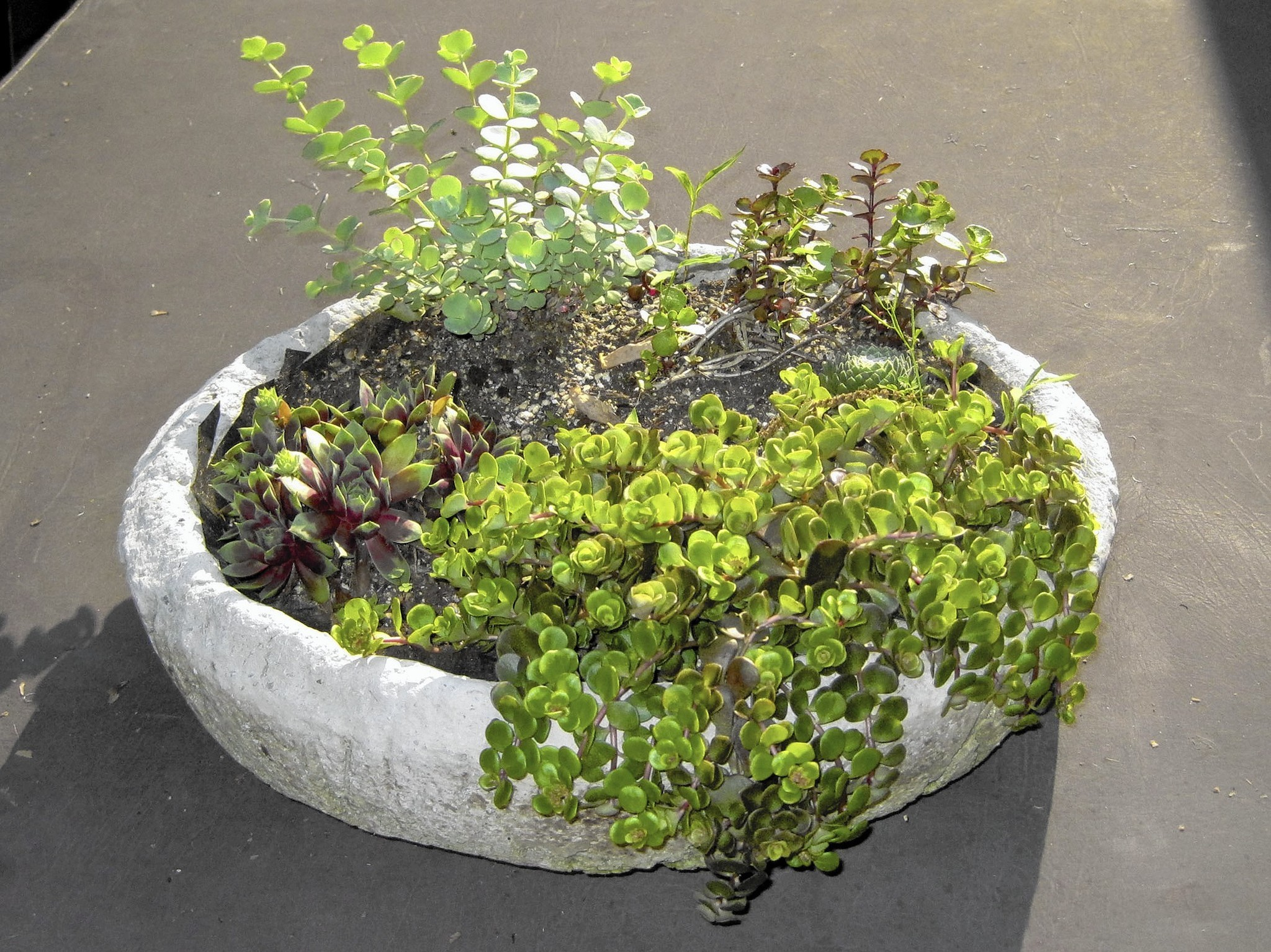 Gardening The Joys And Challenges Of Growing Plants In Pots The