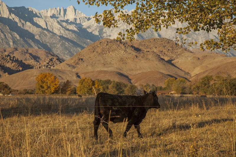Eastern Sierra (Don Kelsen / Los Angeles Times)