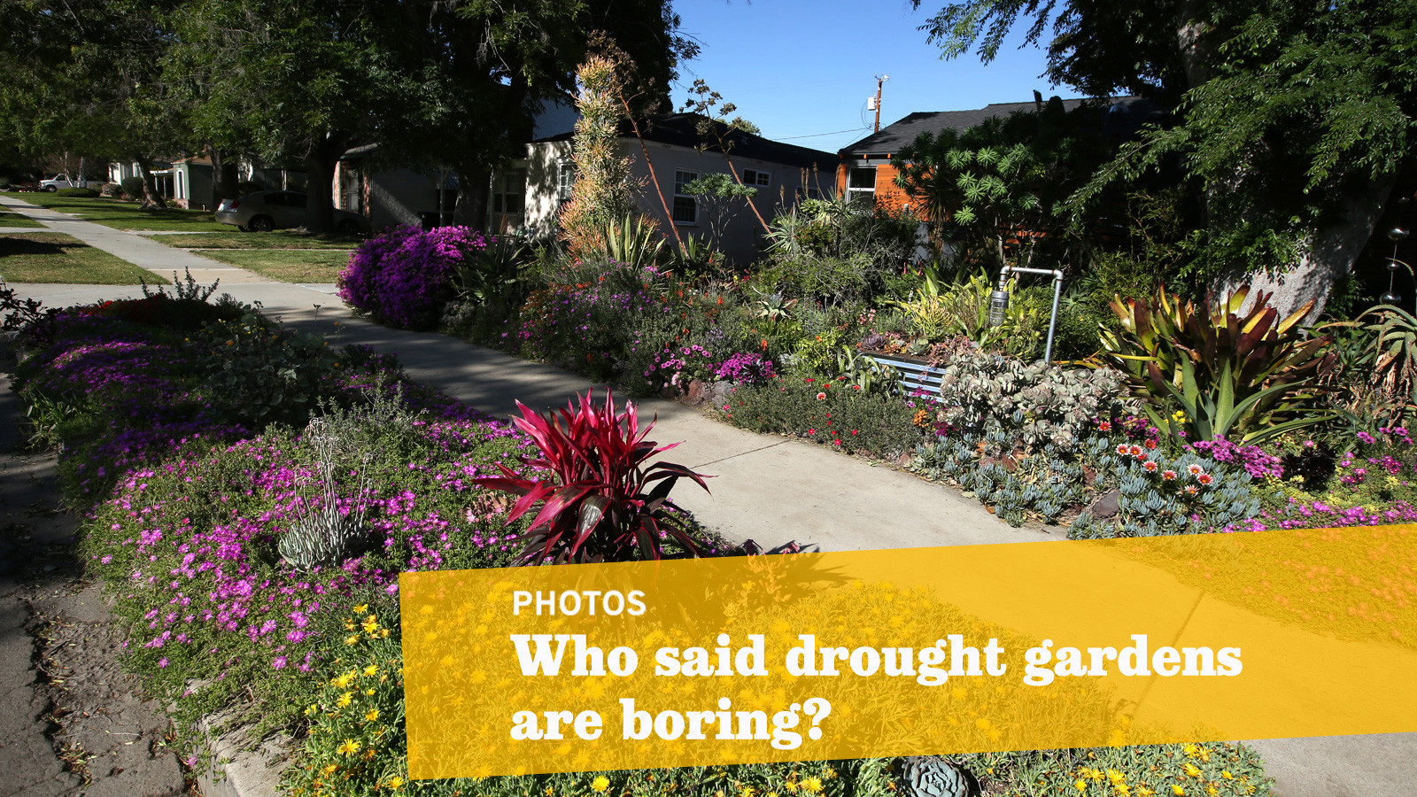 This Drought Friendly Yard Is A Tropical Oasis U2014 In The Middle Of Burbank    LA Times