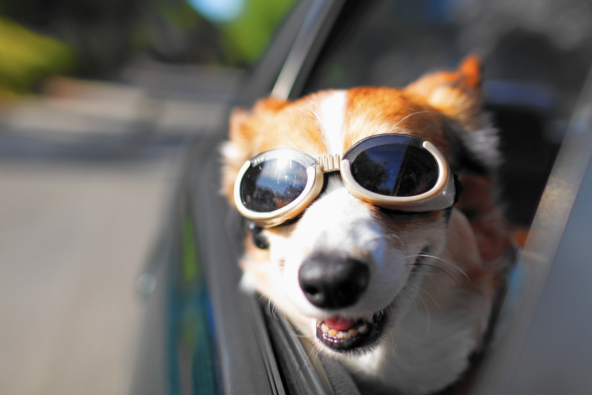 Dog owners engineers work on technology to make pets safe in cars chicago tribune