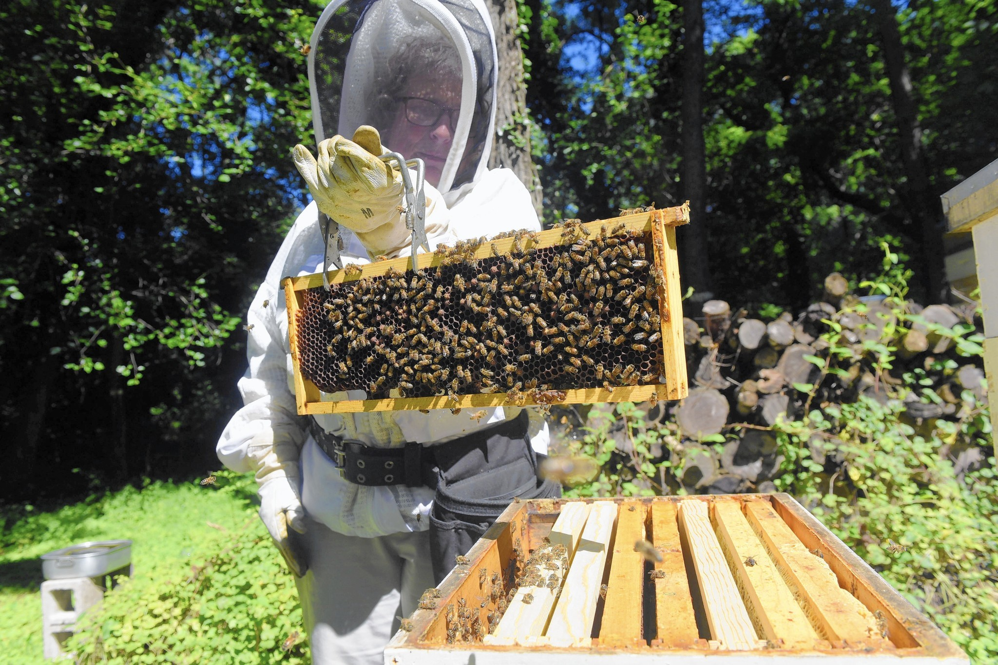 growing number of beekeepers hives abuzz in baltimore baltimore sun