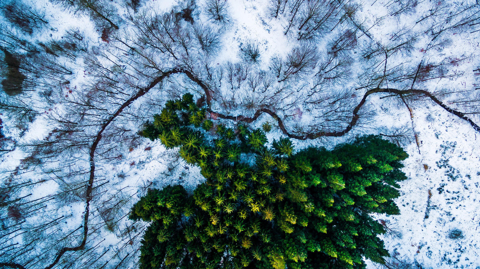 Michael B. Rasmussen's image of the Kalby Ris region of Denmark took first place in the nature/wildlife category.