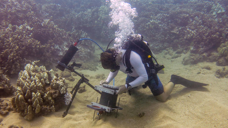 Researcher Andrew Mullen uses the underwater microscope to examine coral off the coast of Maui.