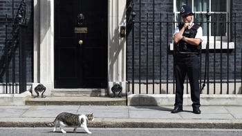 Larry the cat stays: 5 things to know about UK handover
